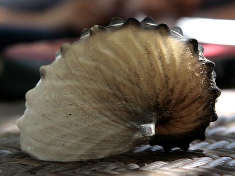 Discovering a Paper Nautilus, Khor Kalba & Al Ain – January 2012