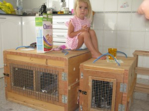 The cats in their crates ready to fly back to the UK